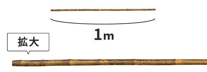 黒竹 1m