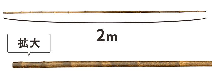 黒竹 2m